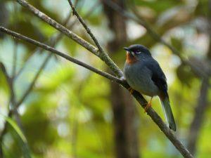 Naturetrek – Ed Drewitt