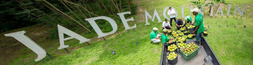 mm-jade-sign
