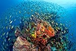 Pristine Coral Reefs and Colourful Tropical Fish